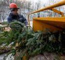 В Киеве больше не будут продавать елки на базарах и у метро