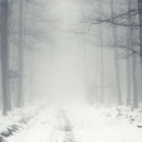 На Татарстан опустится туман