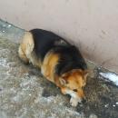 Татарстан не готов к реализации закона об ответственном обращении с бездомными животными