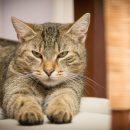 Казанец может получить тюремный срок за жестокое убийство кота