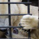 Зоопарки по всему миру усыпляют и распродают животных. Что происходит в казанском зооботсаде?