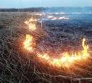 Штрафы за поджег травы увеличили до 153 тысяч гривен