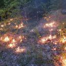 В связи с пожароопасной обстановкой в Татарстане началось авиапатрулирование лесов