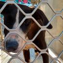 Хозяин потерял собаку на другом континенте и нашел ее через пять лет