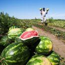 Миру предрекли голод «библейских масштабов» вследствие пандемии коронавируса