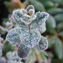 Синоптики предупреждают о заморозках в Татарстане уже на этой неделе