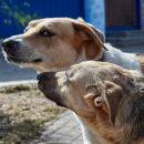 Видео и мнение казанцев: в Казани женщина спасалась от бродячих собак, отмахиваясь сумкой