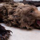 На таможенном контроле в аэропорту Казани сотрудники задержали женщину со шкурой медведя