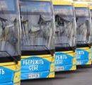 Киев закупил полсотни современных автобусов