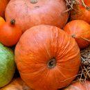 Минсельхоз России займется развитием региональных брендов продуктов питания