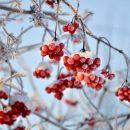 17 ноября в Казани ожидается мороз до -12 градусов