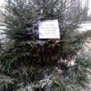 В Киеве обработали елки спецсредствами и напомнили о штрафах