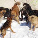 На одной из улиц Казани заметили стаю разъяренных собак