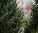 Елку на переработку можно будет сдать уже 1 января в Киеве (адреса)
