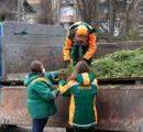 Сдать елку на переработку в Киеве можно до 1 февраля