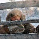 В Якутии зафиксировали аномальные 58 градусов мороза