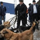 Жириновский призвал ужесточить правила содержания домашних животных
