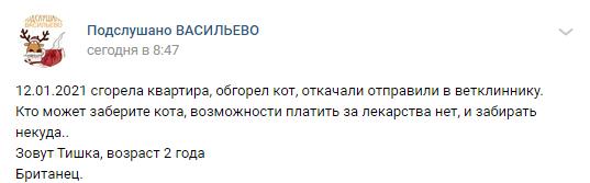 Волонтеры и бывшие хозяева спорят из-за кота, которого спасатели откачали на пожаре под Казанью