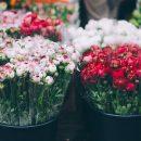 В России спрогнозировали рост цен на цветы к 8 марта