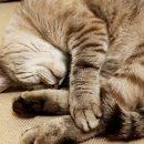 Мужчина из Казани, который порезал кошке лапы, стал фигурантом уголовного дела
