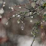 Синоптики рассказали, когда в Казани ждать наступления настоящей весны