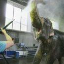 В Росгосцирке рассказали, что стоит за выходками слонов в цирке Казани, и правда ли они опасны
