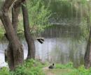 Озеро Вулык просят очистить от мусора и закрепить за КП «Плесо»