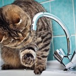 В ряде домов в Казани на целый день 8 апреля отключат воду из-за проведения ремонта
