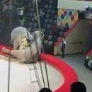 «Психика животных искалечена»: слоних, которые подрались в Казанском цирке, отправили на пенсию