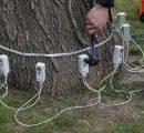 «Больные» деревья в Киеве будут проверять специальным оборудованием