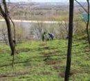 В Киеве убрали от мусора 20 парков и высадили деревья