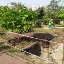 В Киеве 3 га земельных участков превратят в озелененные территории
