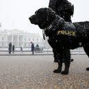 В США собак-полицейских досрочно отправили на пенсию из-за канабиса