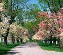 Для создания парка Никольская Слободка выделили землю
