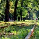 В Киеве пытаются уберечь от застройки 28 гектаров леса в Пуще-Водице