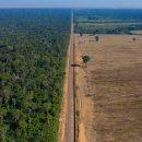 Крупнейшие леса в мире защитят армией