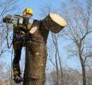 Киевлян будут заблаговременно информировать о проведении работ по обрезке и удалению деревьев