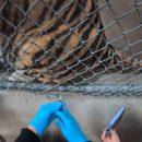 Американский зоопарк начал прививать животных от коронавируса