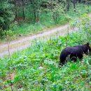 Челябинские медведи собрались на утреннюю трапезу и попали в фотоловушку
