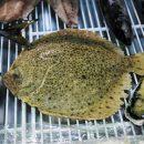 Ценная рыба оказалась на грани истребления