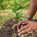 Россияне вырастили собственный лес на берегу реки