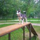 В Днепровском районе обустроили площадку для выгула собак