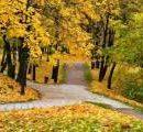 Начали консультации относительно наименования парка вдоль проспекта Романа Шухевича